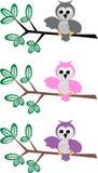 owlmodell Arkivbilder