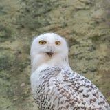 owlprague snöig zoo fotografering för bildbyråer