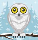 owlprague snöig zoo Arkivbild