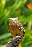 owls fotografering för bildbyråer