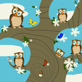Owls. A springtime background with cute owls and butterflies Royalty Free Stock Photography