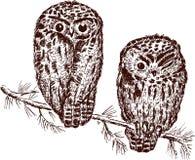 owls Arkivbild