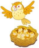 owls Arkivfoton