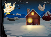 Owls appearing in the middle of the night near the wooden house Stock Photos