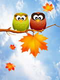 Owls in autumn Royalty Free Stock Image