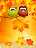 Owls in autumn Royalty Free Stock Photo