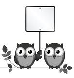 Owls Blank Sign Royalty Free Stock Photo