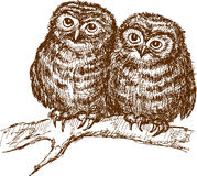 Owls on a branch Stock Image