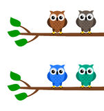 Owls on a branch Stock Photo