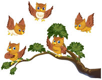 Owls on branch. Illustration of many owls on a branch royalty free illustration