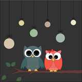 Owls on a branch at night Stock Photography