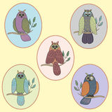 Owls on branch pattern  illustration. On light background pattern Royalty Free Stock Photography