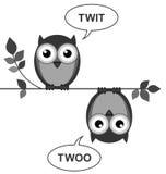 Owls calling Stock Photos