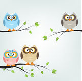 Owls card Stock Photos