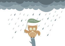 Owls cartoon sitting on a branch in the rain,Vector illustrations Stock Photos