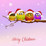 Owls celebrate Christmas Stock Photography