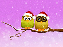 Owls at Christmas Stock Photos