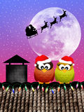 Owls at Christmas Stock Images
