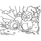 Owls Coloring Pages vector Royalty Free Stock Images