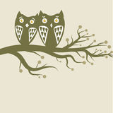 Owls couple Stock Image