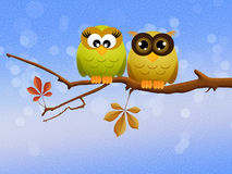 Owls couple on branch Stock Photo
