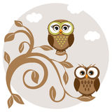 Owls couple on the tree Stock Images