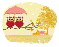 Owls couple under umbrella, autumn rainy day Royalty Free Stock Image