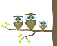 Owls family Royalty Free Stock Photo
