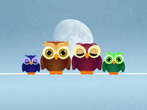 Owls family on wire Stock Photos