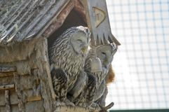 Owls at the farm. Owls in the house at the farm Royalty Free Stock Photos