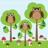 Owls in forest. Cute family of owls in forest Stock Image
