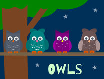 Owls. Four cute little owls with a night background Stock Photography