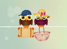 Owls go on vacation Royalty Free Stock Photo