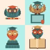 Owls in graduation caps set flat Stock Photos