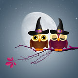 Owls of Halloween Stock Photography