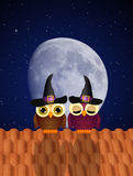 Owls of Halloween Royalty Free Stock Photo