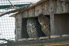 Owls at the farm. Owls in the house at the farm Royalty Free Stock Image