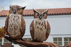 Owls i rosa bunke ståtar 2013 Arkivbild