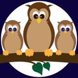 Owls on a Limb Royalty Free Stock Image