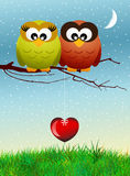 Owls in love. On branches Stock Photography