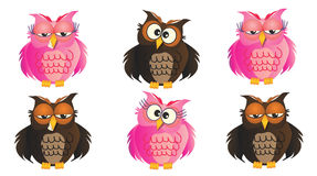 Owls Stock Images