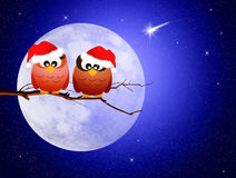 Owls in the moolight Royalty Free Stock Photo