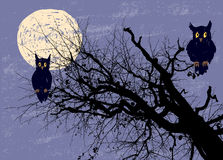 Owls in the moonlight night Stock Image