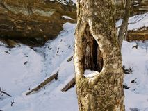 Owls Nest. Hole in a tree for an owl Stock Photo