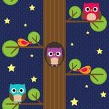 Owls at night Stock Photos