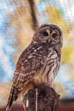 Owls are the order. Strigiformes, constituting 200 extant bird of prey species. Most are solitary and nocturnal stock photo