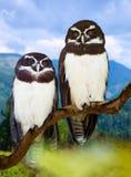 owls på tree royaltyfria foton