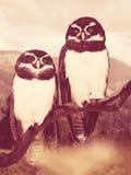 owls på tree arkivfoton