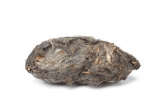 Owls pellet Royalty Free Stock Images