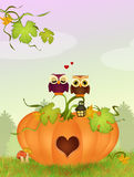 Owls on the pumpkin in a heart shape Royalty Free Stock Photography